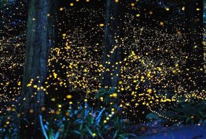 homestay seremban sungai timun fireflies